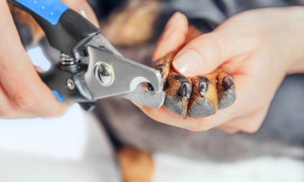 How to Stop a Dog's Nail from Bleeding?