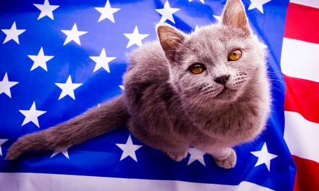 Patriotic Pet Cats