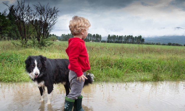 Why Are Dogs Afraid of Thunder, and What Can Be Done About It?