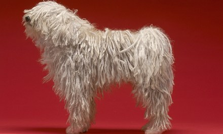 Least Popular Dog Breeds