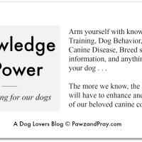 Canine Influenza—Knowledge is Power!