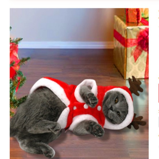 Christmas Cat Dog Santa Hoodie 1