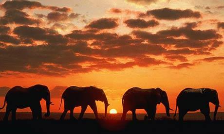 elephant10e