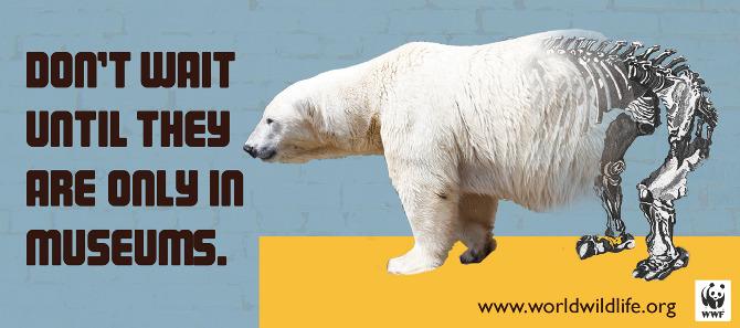 World Wildlife Fund  Elizabeth Strunk Designs