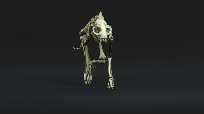 Cat Skeleton  Ashleigh Chaney 3D