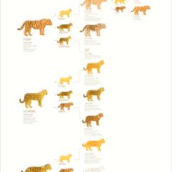 Diagram Of Playstation 3 Trane Series E Centravac Lions & Tigers Leguars, Oh My! - Amberlcox