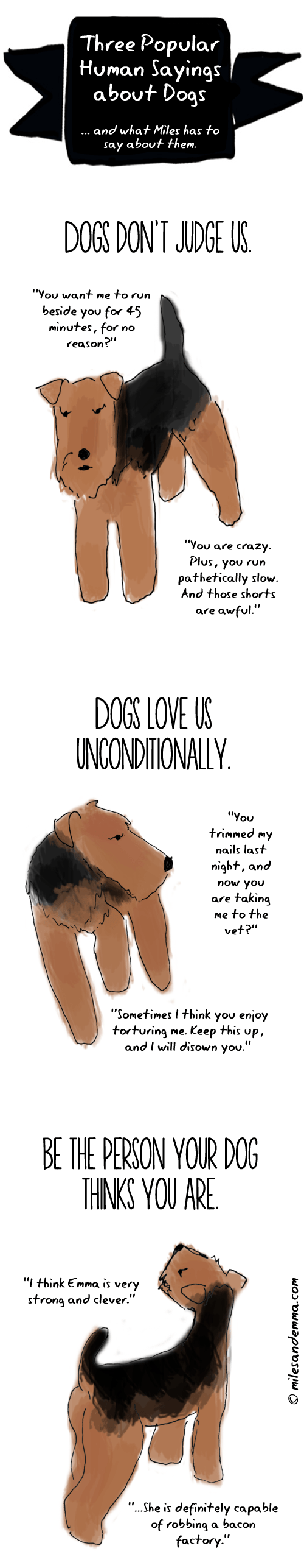 Three Popular Sayings about Dogs </br>...and what Miles has to say about them.
