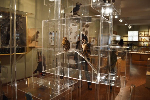 Derby Museum And Art - Ethical Taxidermy
