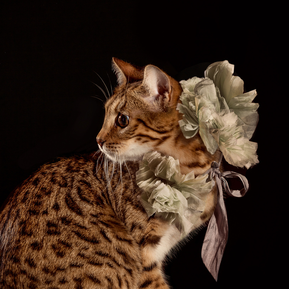 The Elizabethan Cat Collars  Ad Campaigns