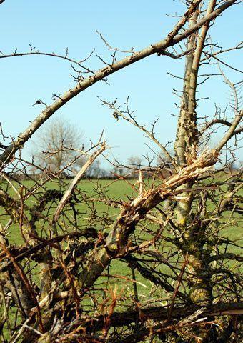 degats-epareuse-haie-arbre
