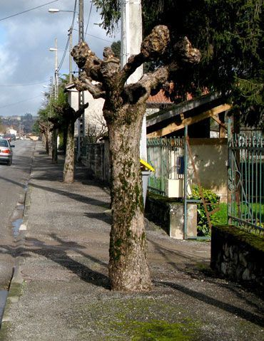 taille-radicalle-arbre