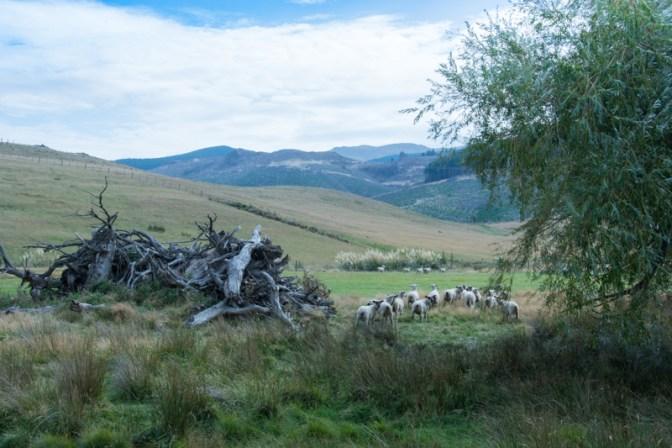 Une (petite) partie des terres de Ben - http://paysansdavenir.com/portrait-dagriculteur-ben-richards-8040-moutons/