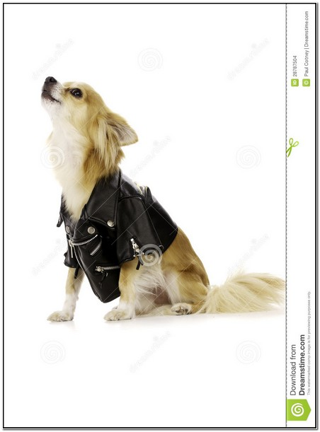 Black Leather Jacket For Dogs