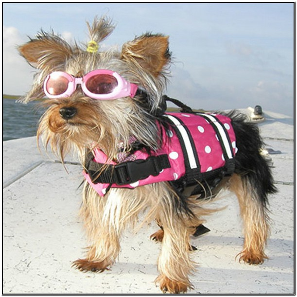 Target Life Jackets For Dogs