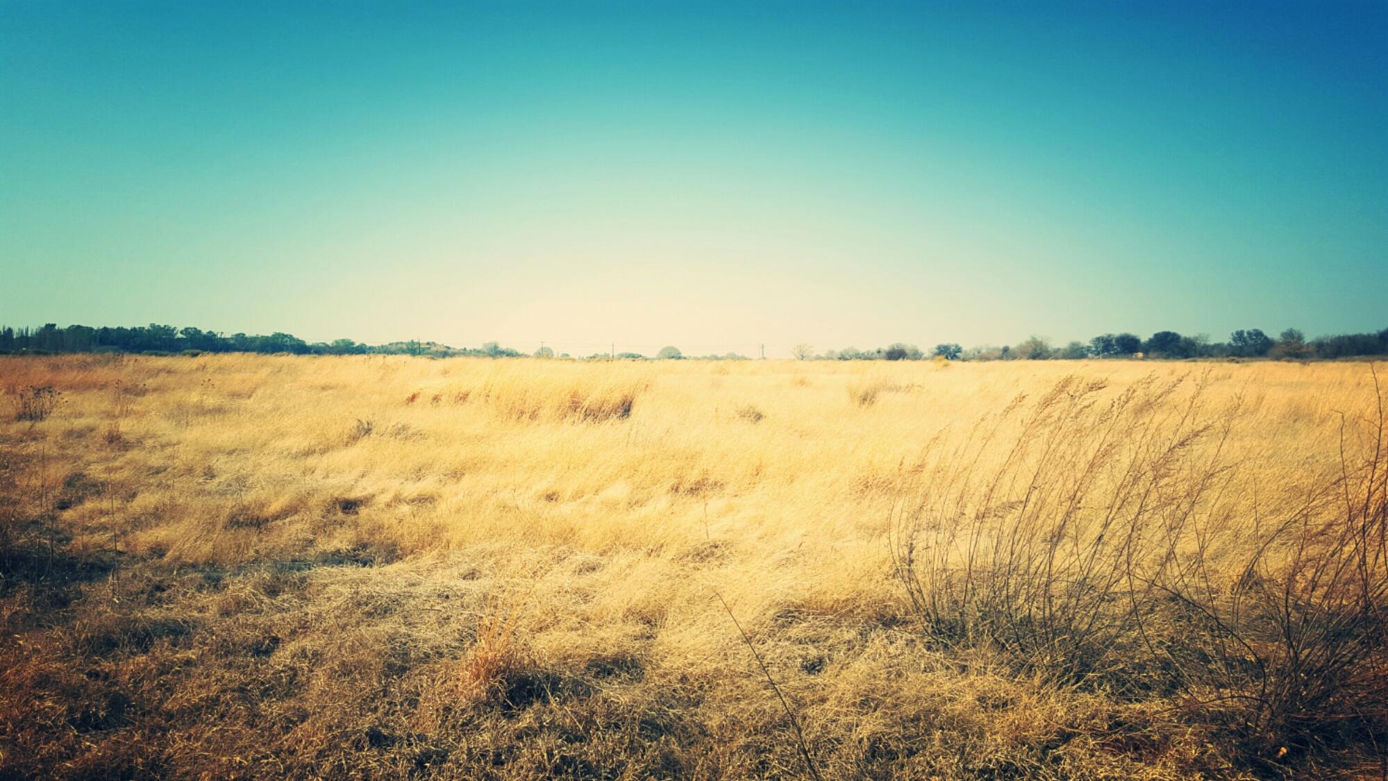 Savanna Grassland Biome