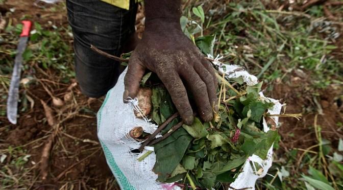 Restitución de tierras en un contexto de apertura económica