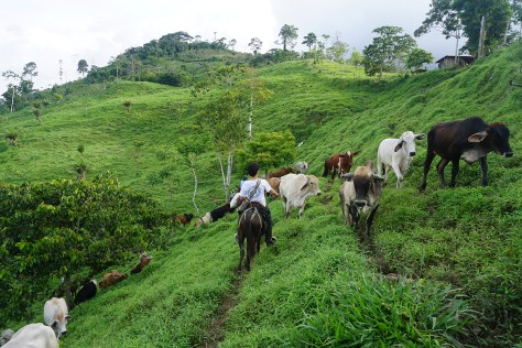 Brigadista en mula, La Esperanza (SJA)