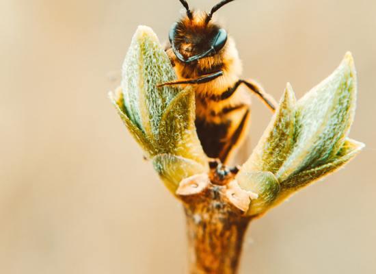 urban-bee