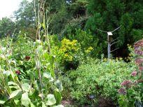 Butterfly Garden at Duke Gardens