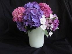 Hydrangea Gift - June 20, 2016