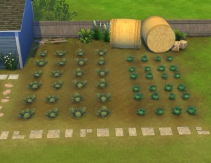 liberated-gardenstuff-fields