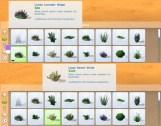 mts_plasticbox-1488954-pbox_liberated-plants-desert_cat02