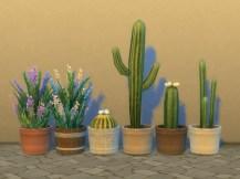 pottable-desert-plants