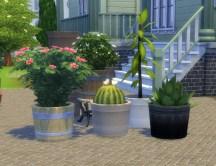 pottable-plants_02