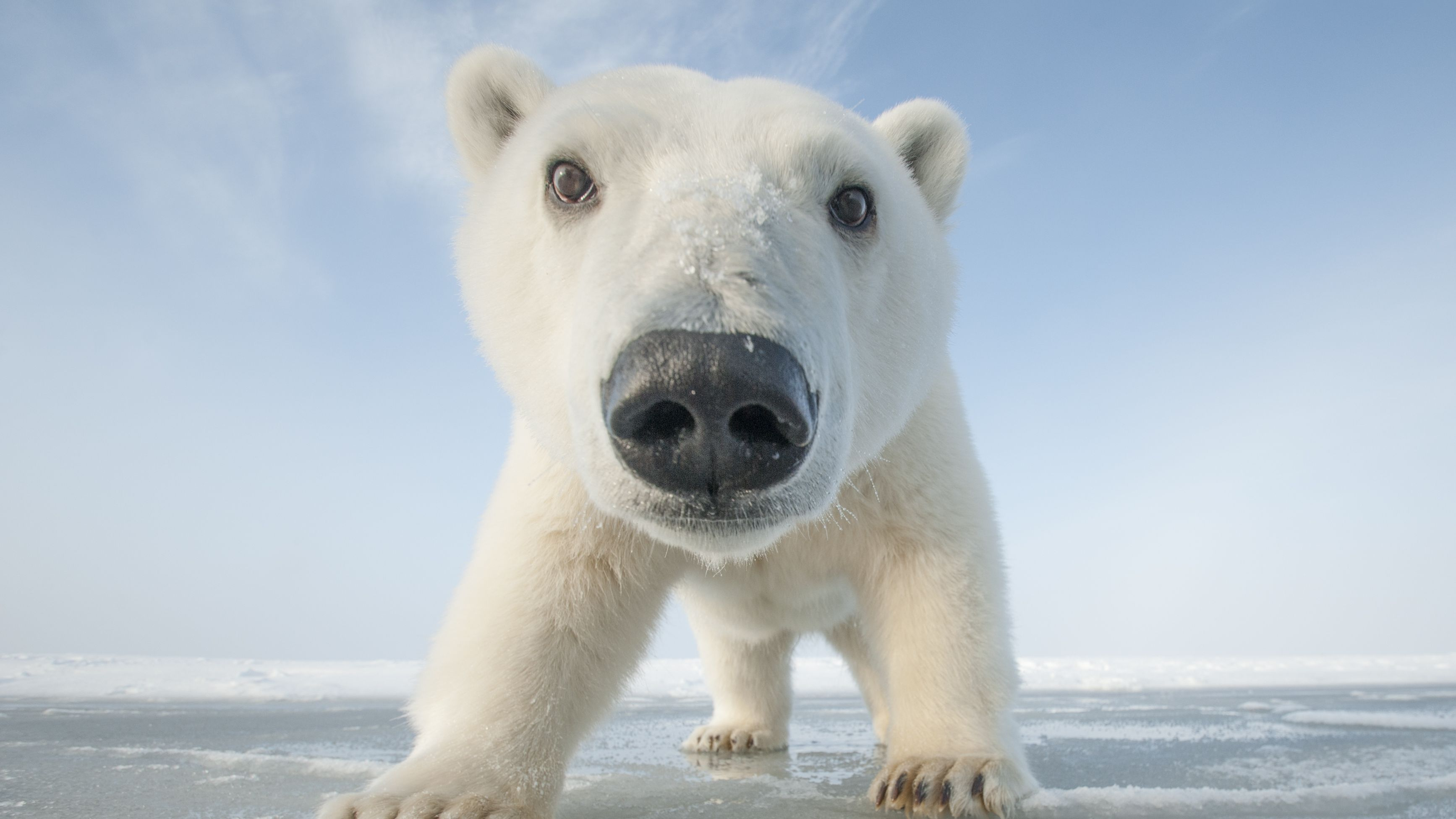 Snowbound Animals Of Winter  Full Episode  Nature  Pbs