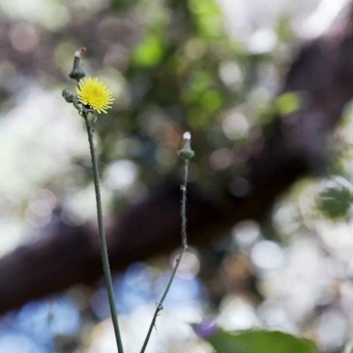 Image for the Tweet beginning: A still life, a sculpture,