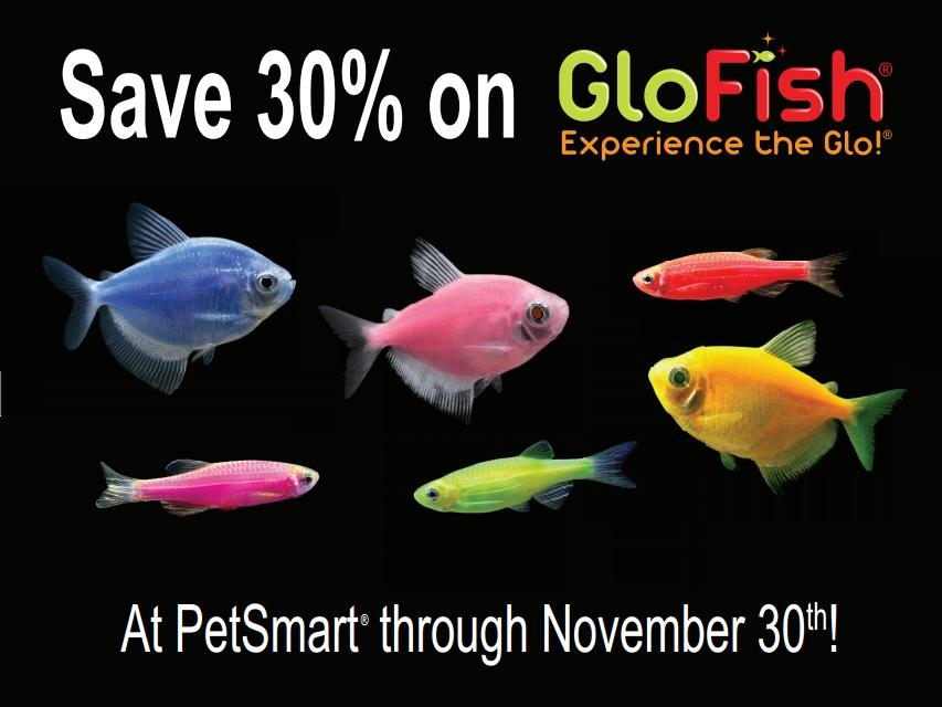 glofish on twitter brighten