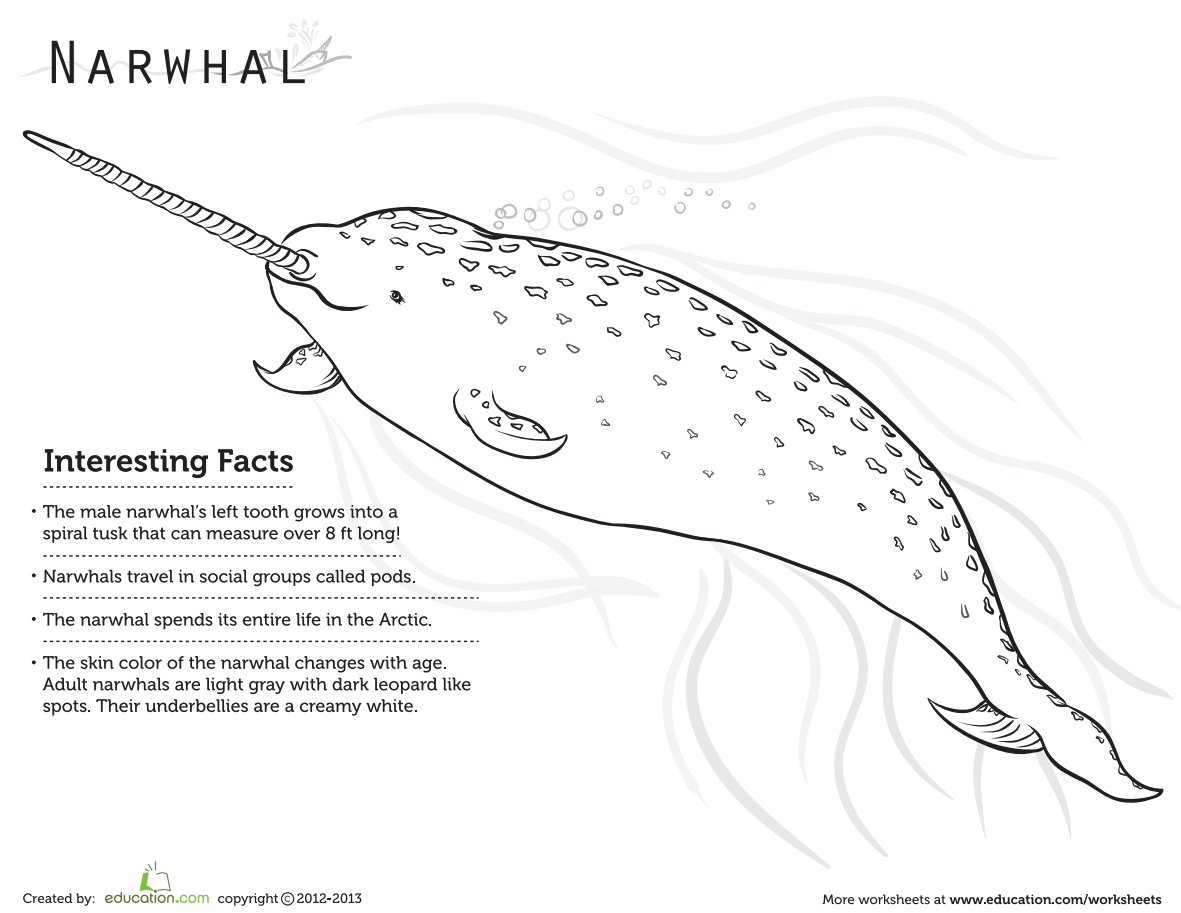 Education On Twitter This Narwhal Coloring Page Is