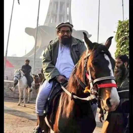 Image result for hafiz saeed horse