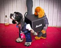 "Planet Rock on Twitter: ""Best Pet Costume ever ..."