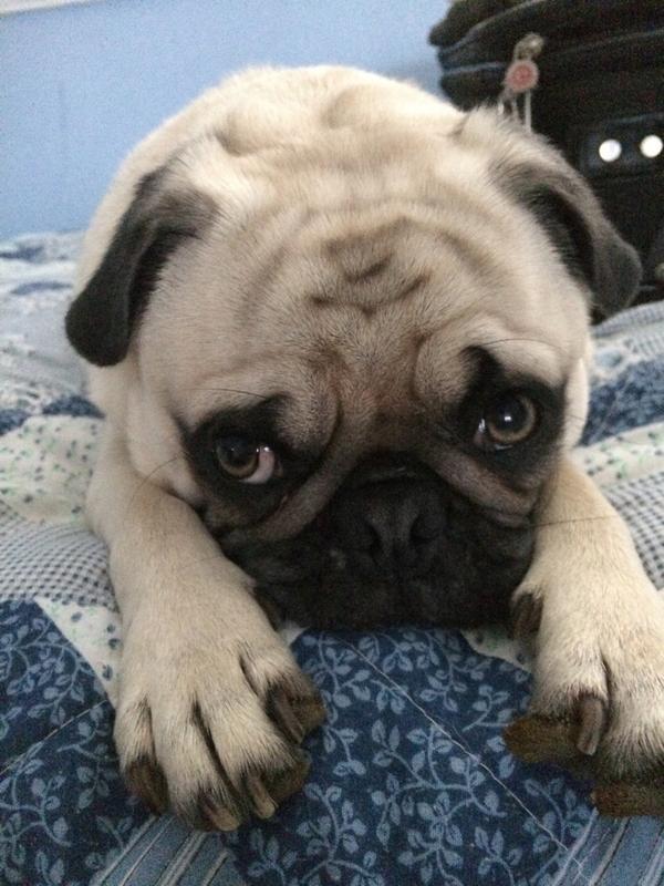 Faze Rug Dog