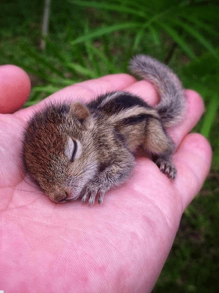 How to Feed a Baby Squirrel: 15 Steps (with Pictures