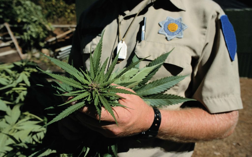 Truth Be Damned! Here Are 5 Big Cannabis Lies and the Liars Who Spread Them.