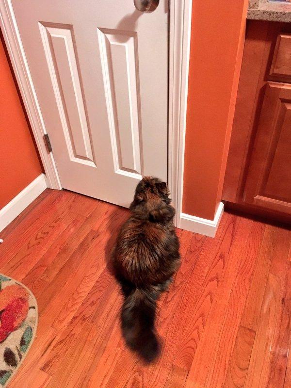 Lucy Cat Lucymusiccat Twitter