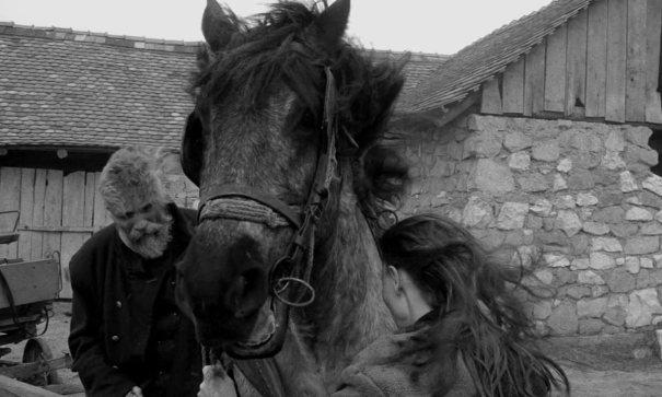 Torino Atı ile ilgili görsel sonucu
