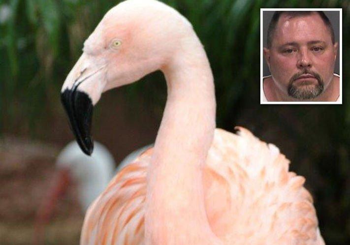 Competency questioned in Busch Gardens flamingo death case