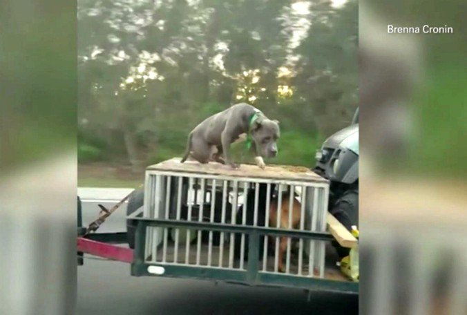 Florida bill seeks to reduce roadway dog deaths after viral video sparks awareness.