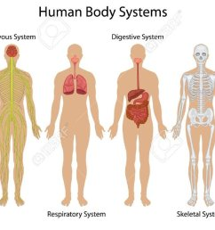 noel pauller on twitter human body systems vocabulary https t co tlmp4xgvgr  [ 1200 x 690 Pixel ]