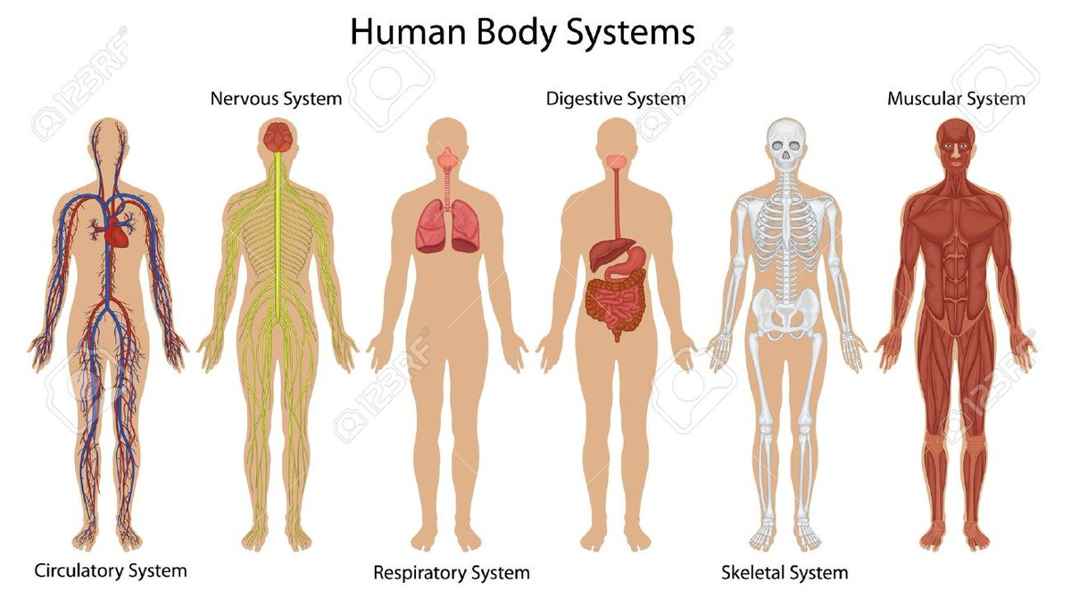 hight resolution of noel pauller on twitter human body systems vocabulary https t co tlmp4xgvgr