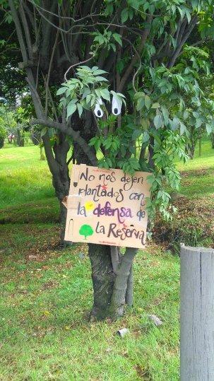 """Árboles """"defendiendo"""" la Reserva"""