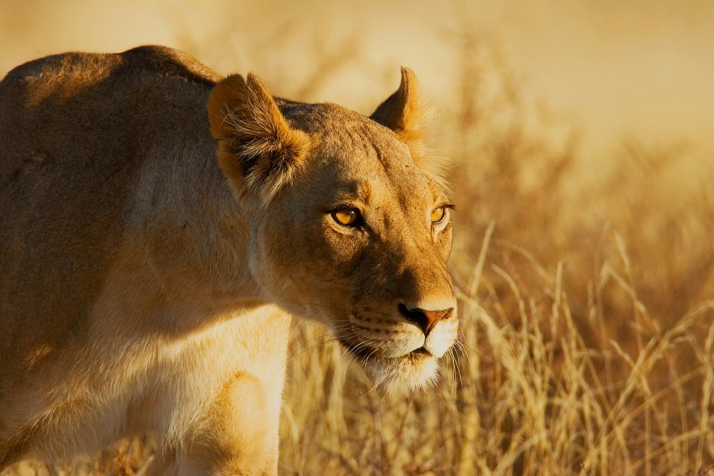 Headout on safari to the Kenyan Savannas with Virry #VR for #PlayStationVR -
