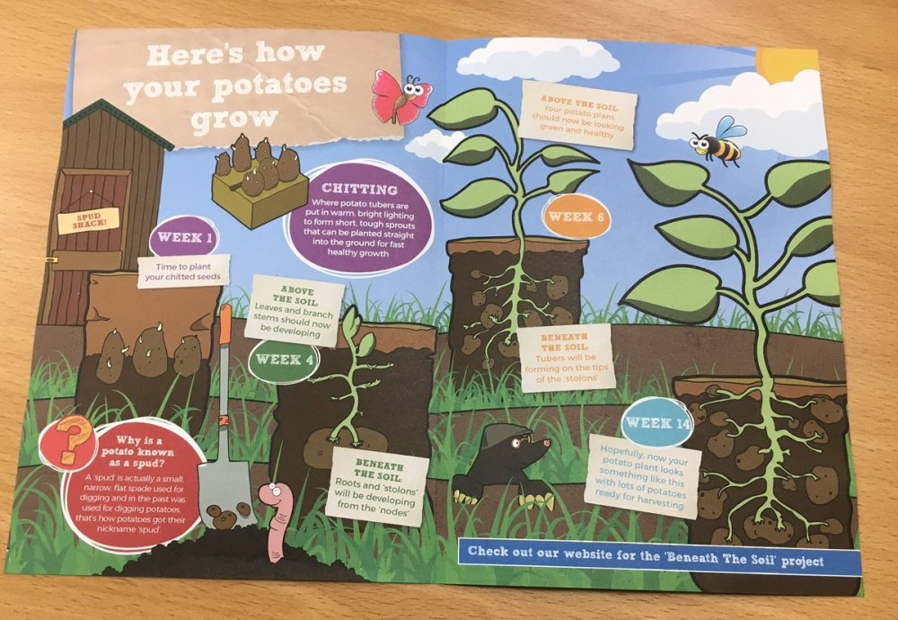 medium resolution of part of potatoes4school is the beneath the soil project where the children can look at what happens to potatoes as they grow gyoppic twitter com