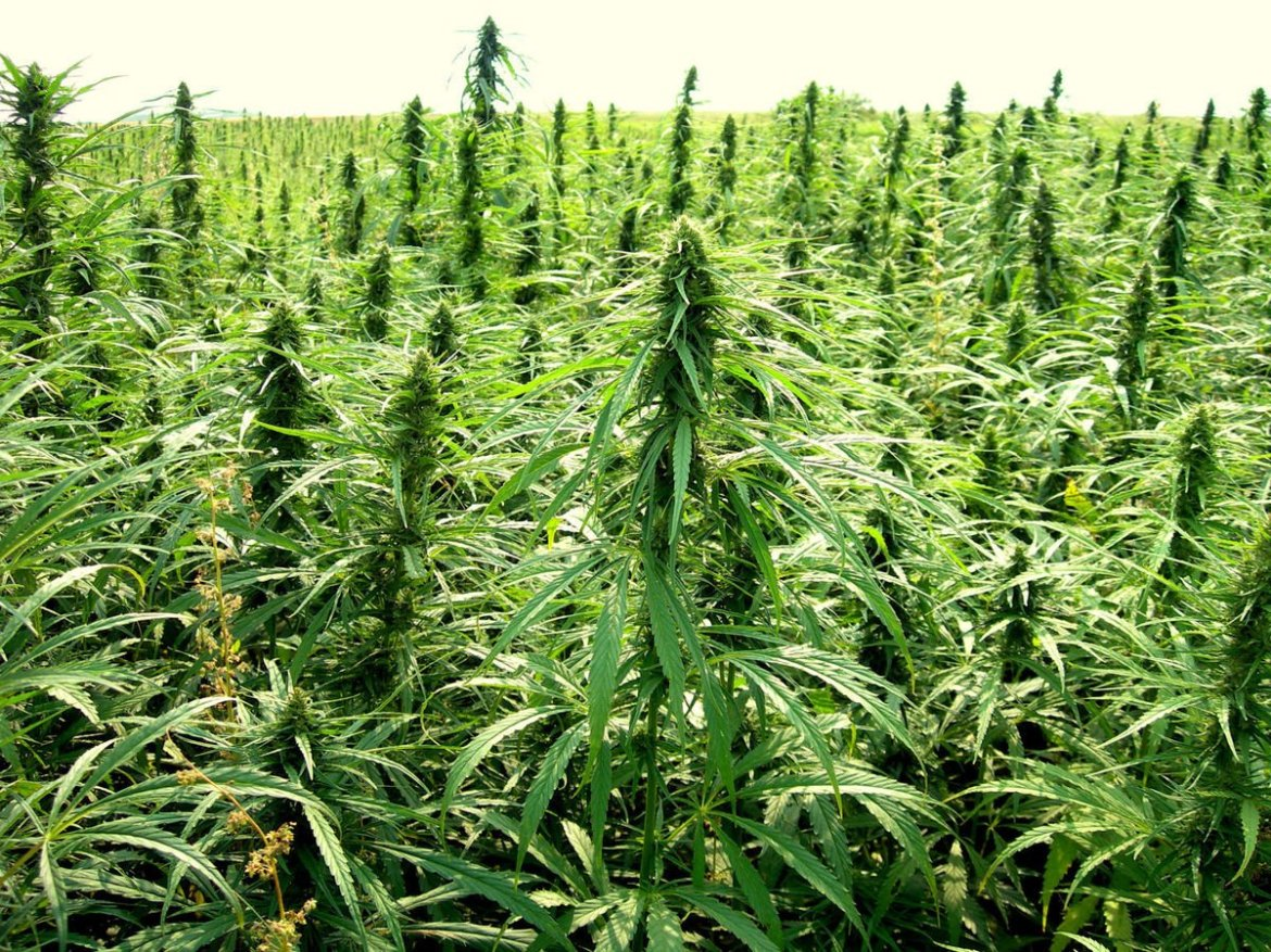Hemp Bill Advances In #Arkansas Legislature     #MME #Hemp #AR #Hempseeds #Hempoil