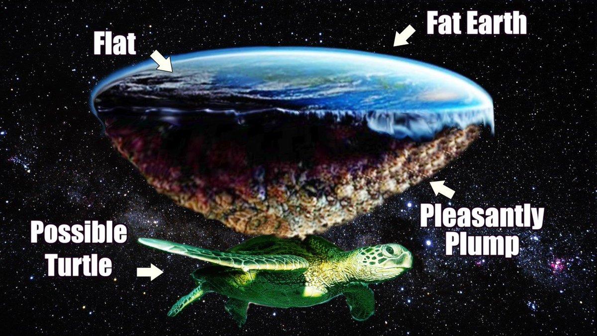 hight resolution of creationist cat