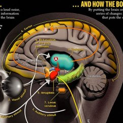 The Anatomy Of Anxiety Diagram John Deere F525 Ignition Switch Wiring A Health Blog On Twitter Infographic