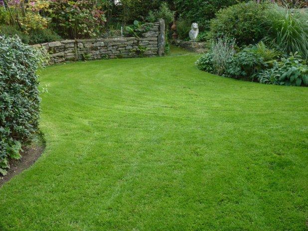 Виды и преимущества рулонного газона